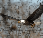 Hra - BaldEagleJigsawPuzzle