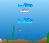 Hra - Fishy