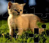 Hra - Puzzleskoťátky